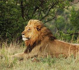 The big five at lions valley lodge