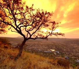Looking for amazing game reserves in KwaZulu-Natal?