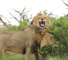 The Wonders of Nambiti Private Game Reserve